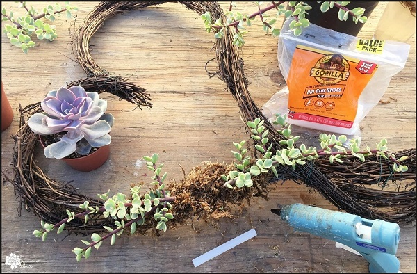 add succulent cuttings to grapevine wreath with hot glue