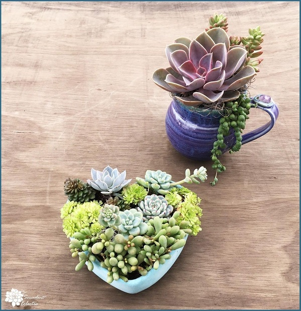 succulents planted in purple ceramic mug and concrete bowl drilled with drainage holes