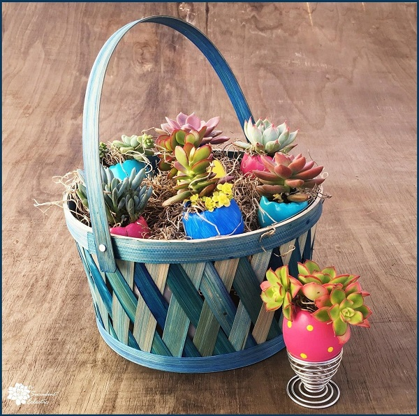 DIY Succulent Easter Eggs in Easter basket with egg cup