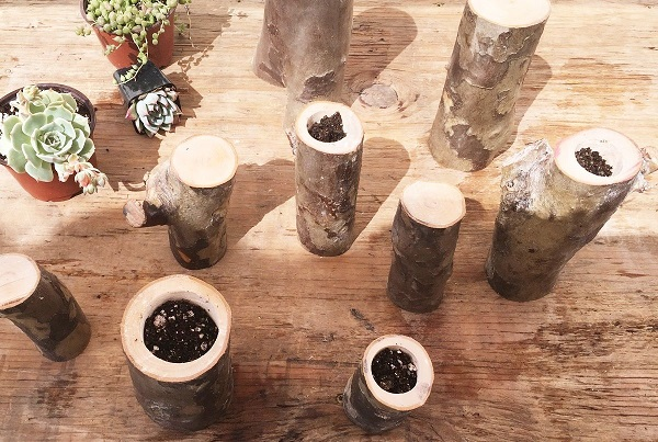 add succulent soil to tree branch planters holes