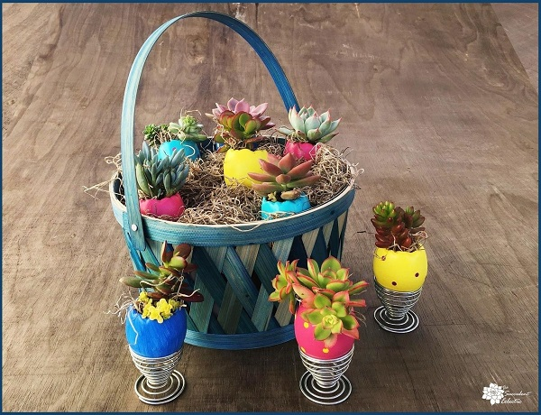 Easter basket and 3 egg cups with succulent Easter eggs displayed