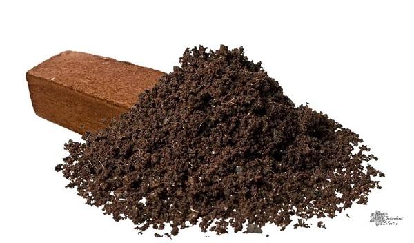 coco coir is excellent amendment for succulent soil