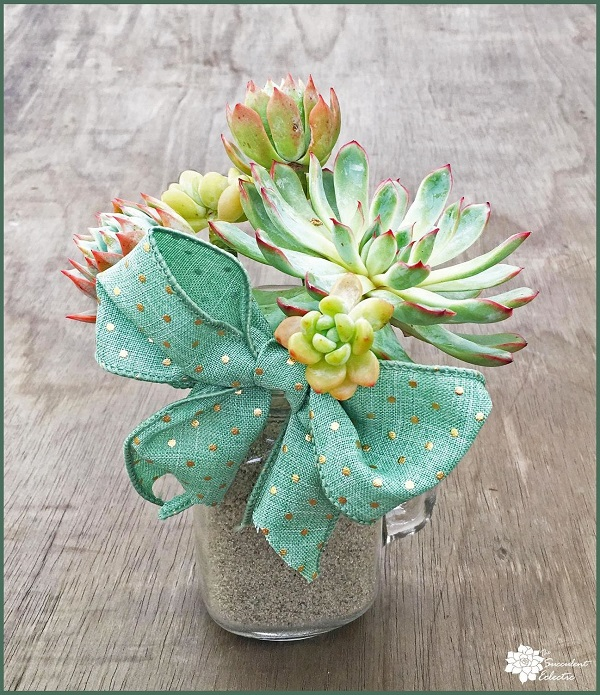 succulent bouquet in glass mason jar mugs