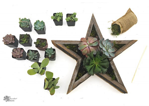 begin planting Star Shaped Planter with largest succulents
