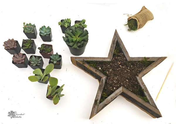 Add soil to Star Shaped Planter for Succulents