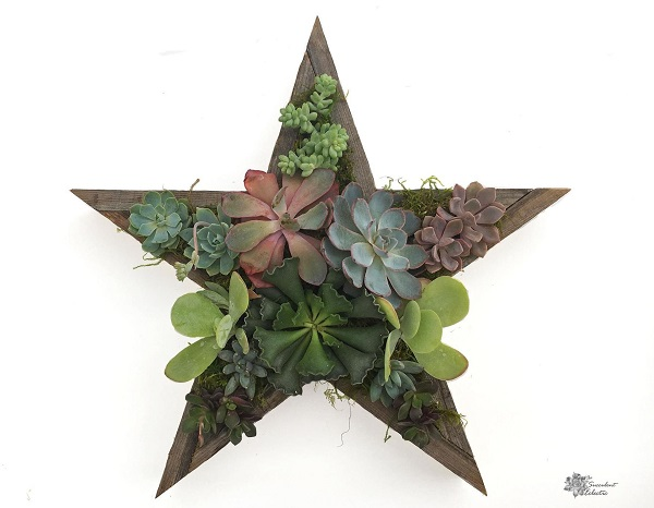 fully planted reclaimed wood Star Shaped Planter