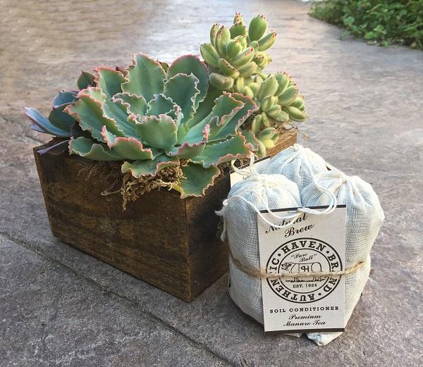 haven brand manure tea bags, an excellent succulent fertilizer