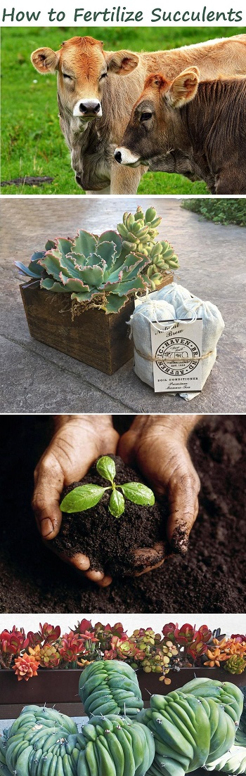 organic succulent fertilizer - which to use, when and how often