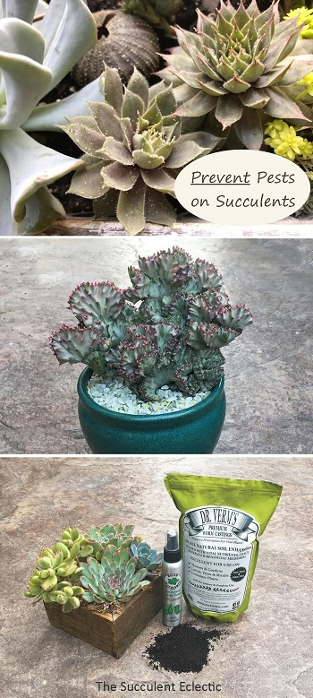 Learn how to treat and PREVENT pests on succulents
