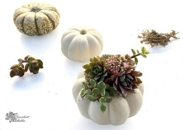 DIY succulent pumpkin tutorial