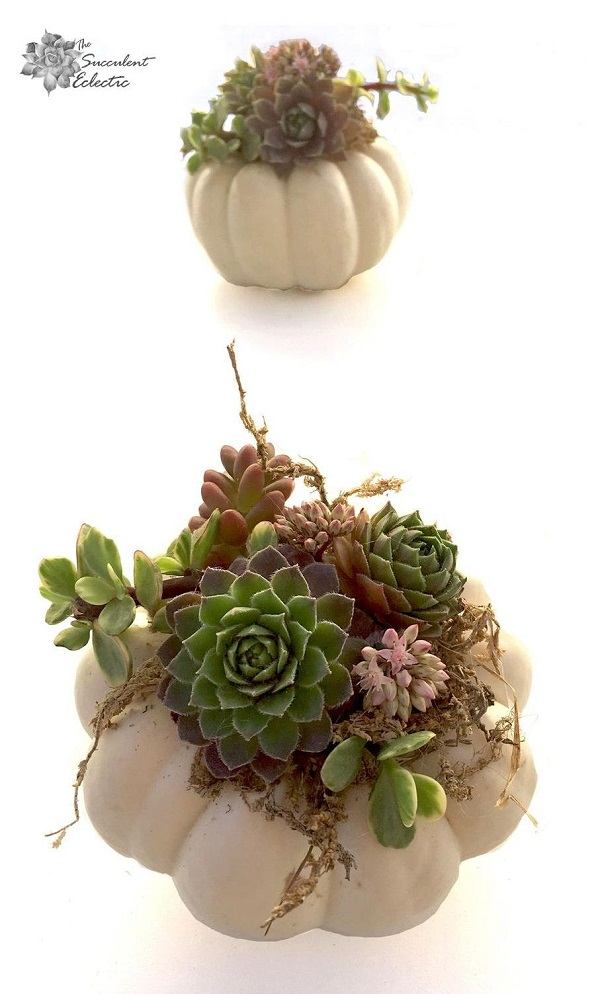 finished succulent pumpkin