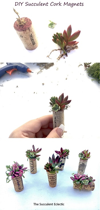 DIY Succulent Wine Cork Magnets - Step by step tutorial