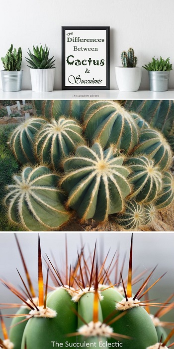 Learn all about the differences between cactus and succulents!