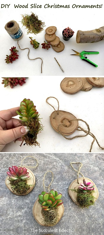 DIY rustic Christmas ornaments with wood rounds and succulents