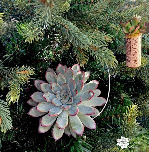 DIY Living succulent Christmas ornaments and wine cork ornament