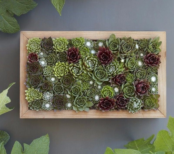 living picture succulent wall planter makes a great gift for succulent lovers