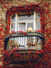 red leaf ivy balcony in paris via bloglovin