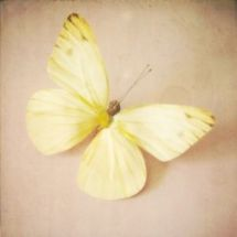 pastel yellow butterfly via pinterest