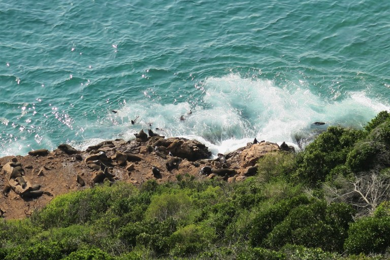 Cape Seals at Robberg Nature Reserve The Budget Traveller's Guide to the Garden Route Road Trip