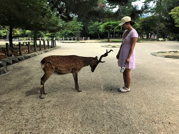 Deers-at-Nara-Budget-Breakdown-The-Cost-of-Travelling-in-Japan