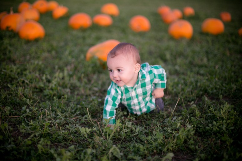 pumpkin-patch-3