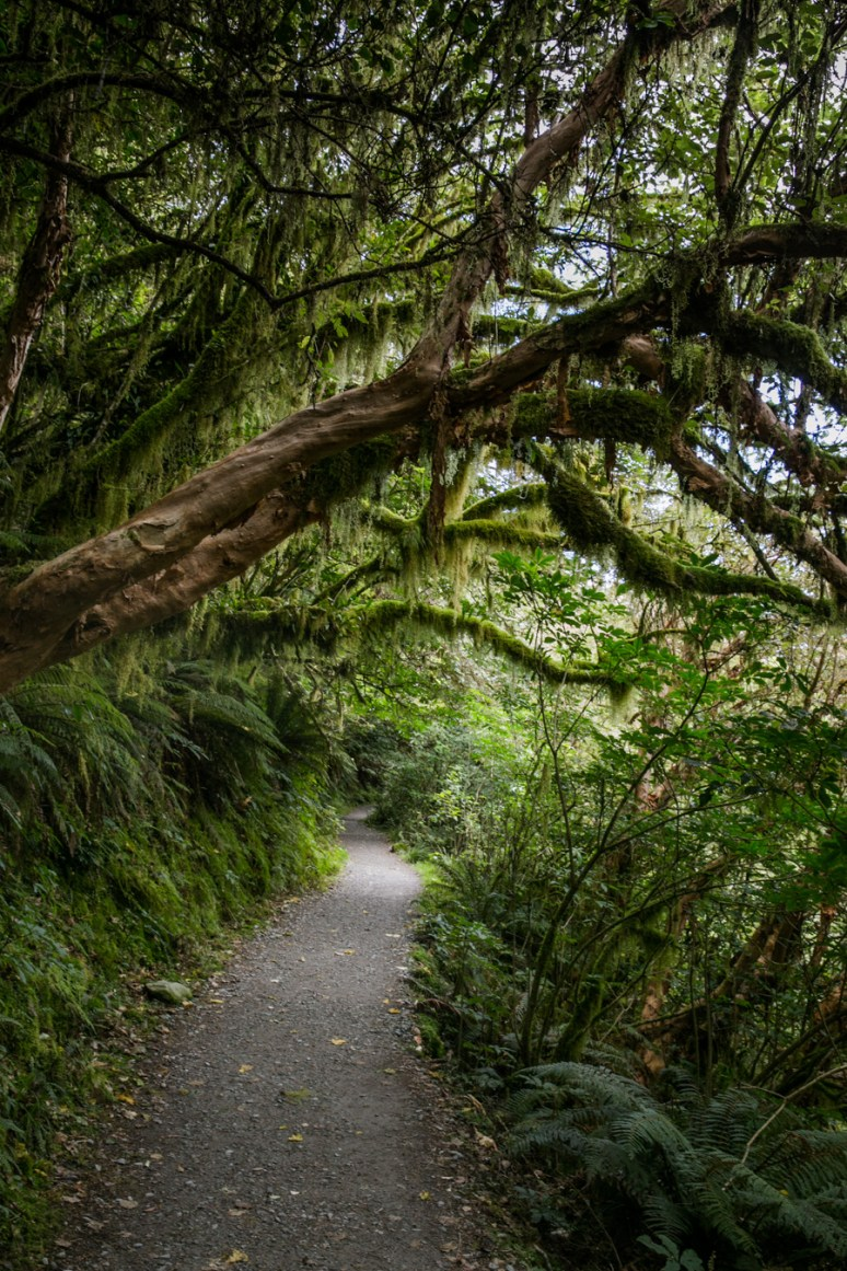 Milford Sound-2