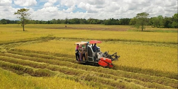 Cotabato rice farmers show that rice self-sufficiency is possible