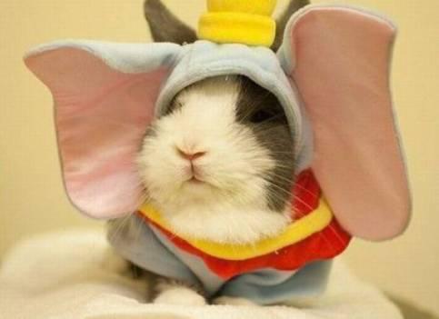 6-cute-animals-rabbit-elephant-wannabe-1