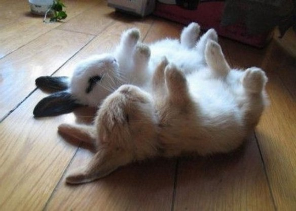 upside-down-bunnies