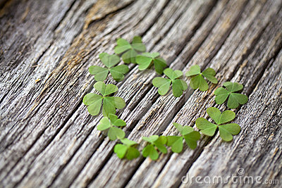 lucky-love-clover-heart-wooden-background-24455521