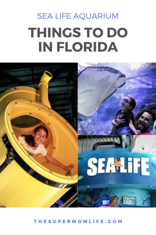 Looking for a fun place for your family while you're in Orlando, FL? Make sure to check out SEA LIFE Aquarium, on International Drive. i drive 360, international drive, orlando aquarium, orlando attractions, things to do in orlando, top attractions orlando, things to do with kids in orlando