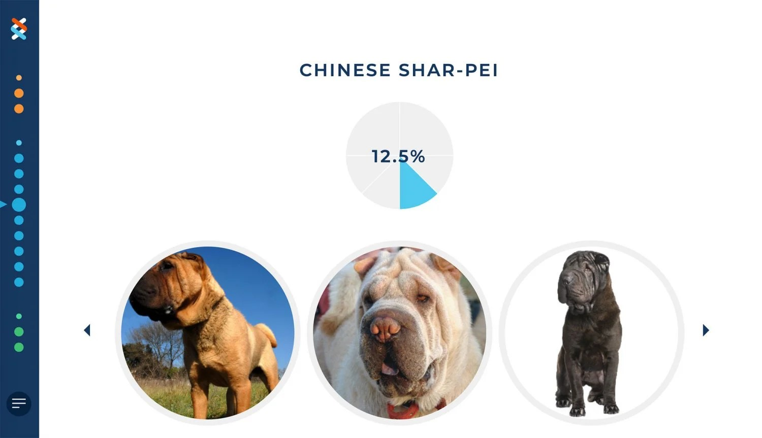wisdom panel, dna test, chewy, chewy.com, what breed, dog breed, shar pei mix, guess, puppy, dog, Sharpei, Shar Pei, rescue dog, rescue puppy, getting a dog, mom blog, mom blogger, mommy blog, mommy blogger, 2019, family blog, parenting blog, the super mom life, thesupermomlife, parenting blogger, family blogger