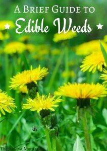 edible weeds
