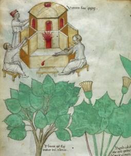 Manuscrit Sloane 4016 (2)