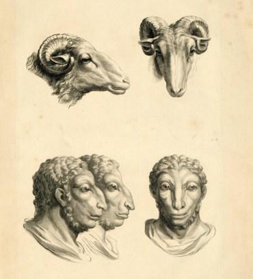 Dissertation sur un traité de Charles Le Brun, concernant le rapport de la physionomie humaine avec celle des animaux - rapport de la figure humaine avec celle du bélier