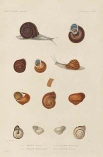 Voyage de découvertes de l'Astrolabe, exécuté par ordre du roi, pendant les années 1826-1827-1828-1829, sous le commandement de M. J. Dumont d'Urville - Page 021