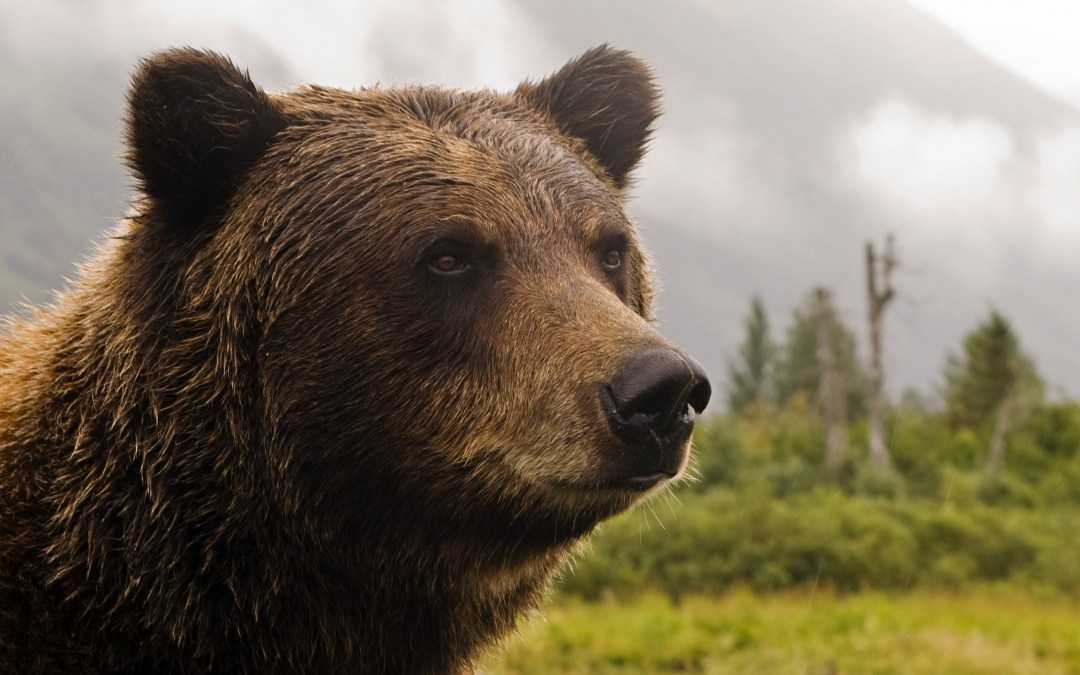 L'homme ours