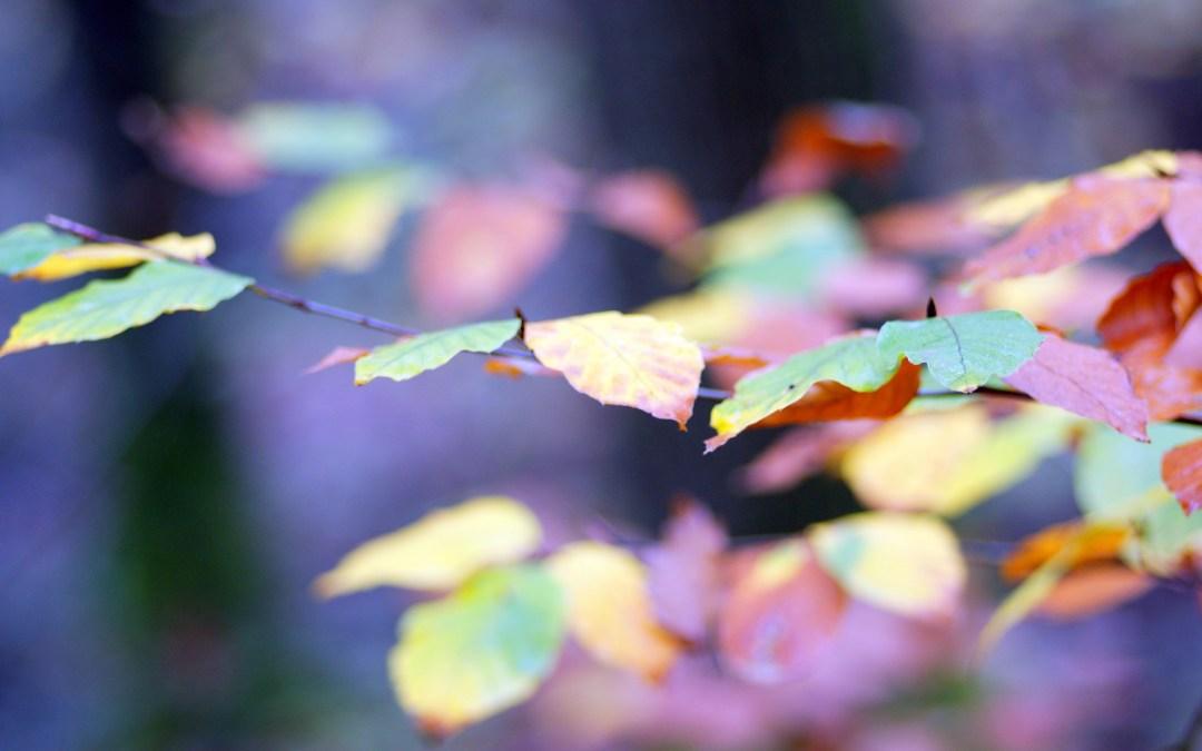L'automne en ville