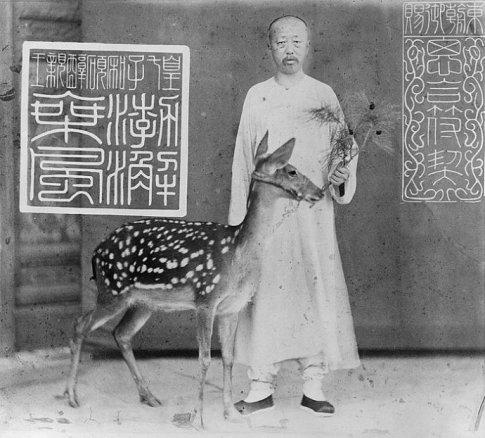 Yixuan, prince Chun, nourrissant une biche