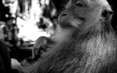 Ubud stories #1 : la forêt des singes