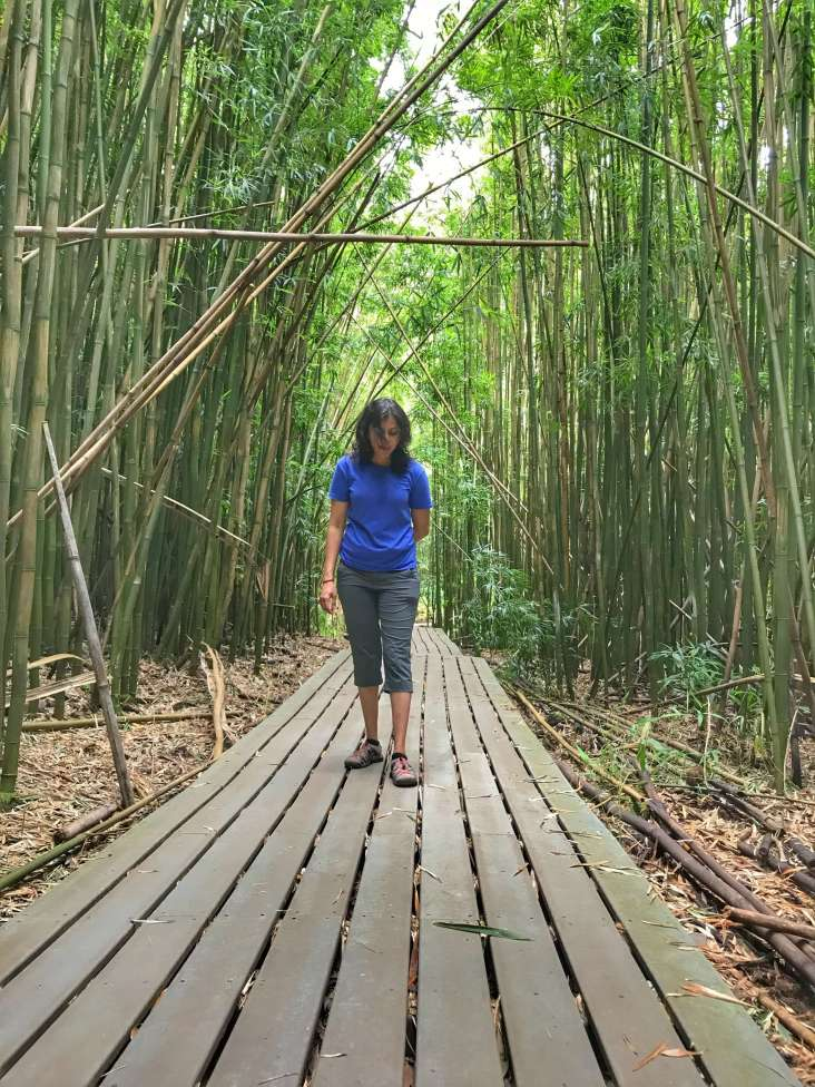 Bamboo grove along Pīpīwai Trail on the other side of Haleakalā National Park