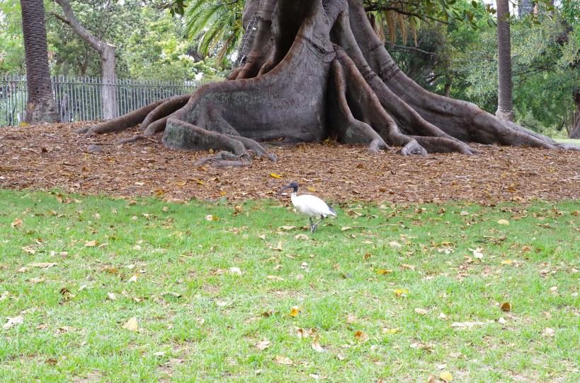 Wildlife at the Royal Botanical Gardens