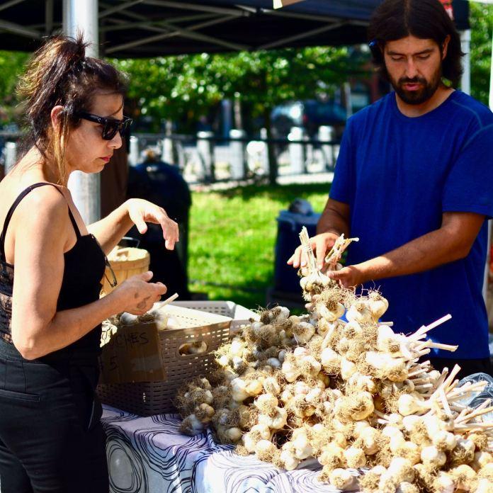 toronto garlic festival