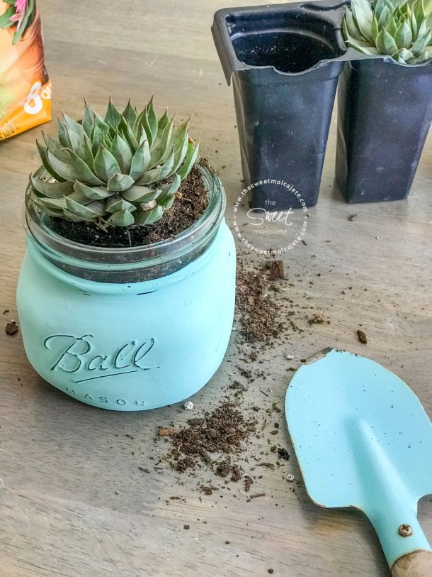 como plantar una suculenta en frasco de vidrio