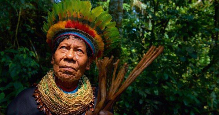 how_ayahuasca_works