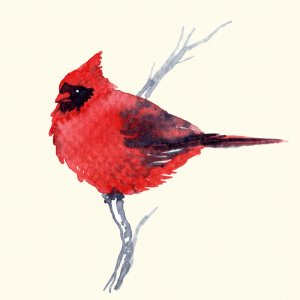cardinal-watercolor
