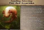 SomethingInteresting_AlpLuachra
