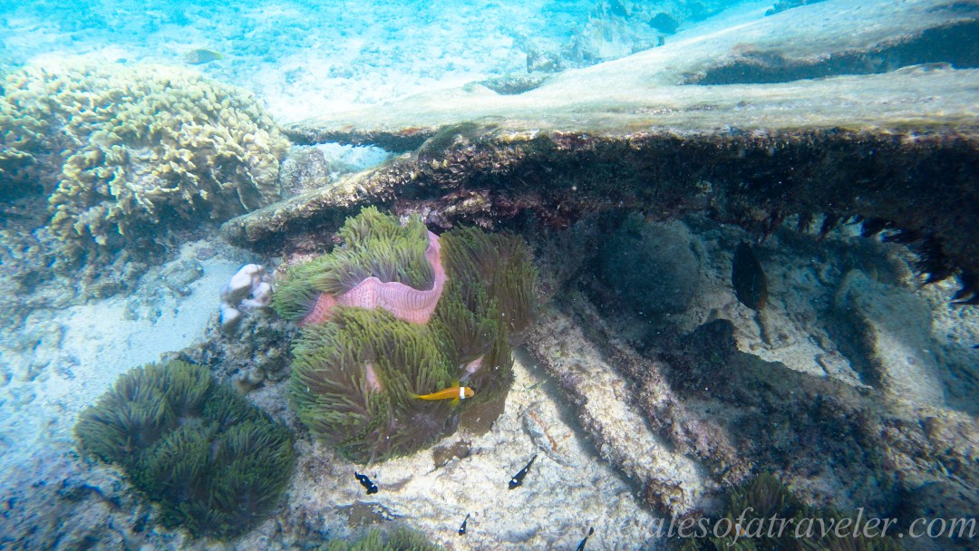 snorkeling lakshadweep