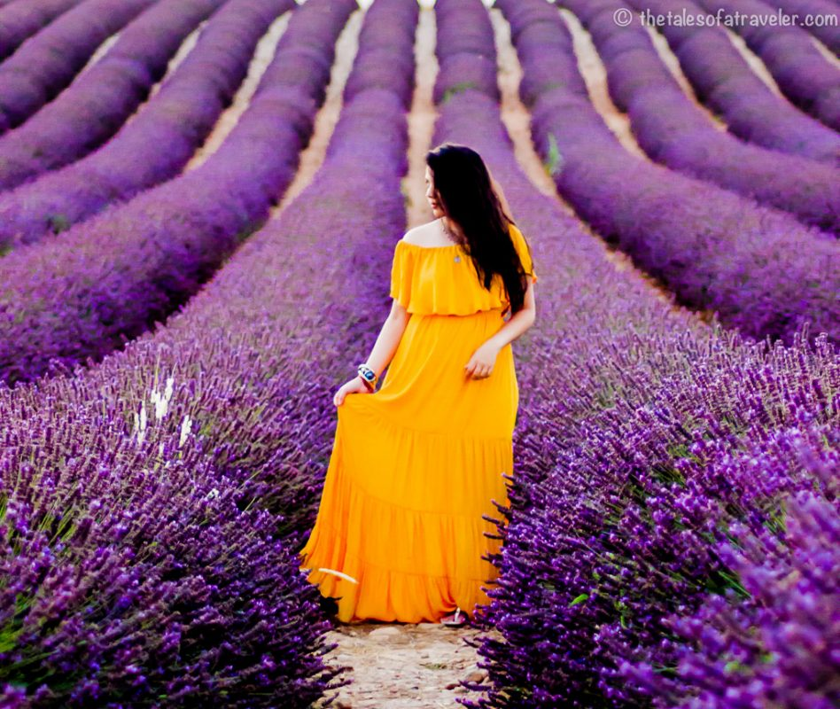 Best Lavender Fields in Provence France
