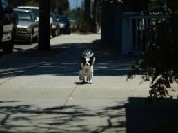 gj padilla, dogs, walking, the talking district, santa barbara, territorial, nature